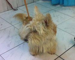 Dog Star - Revel - Epilation SCOTTISH