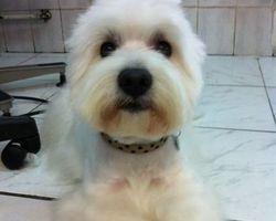 Dog Star - Revel - Epilation WESTY